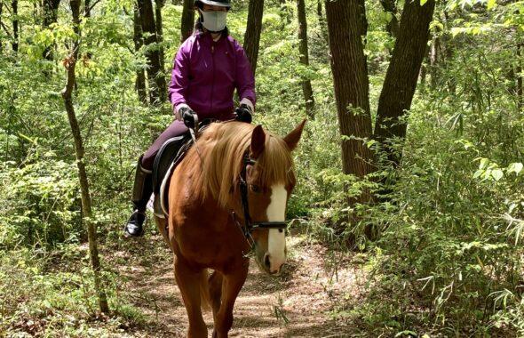 馬と森でお散歩
